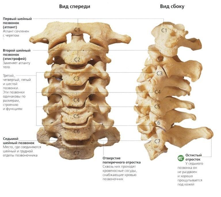 Лечение спондилеза грудного отдела позвоночника: методики