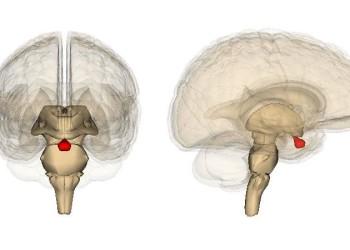 Аденома гипофиза головного мозга: операция, симптомы, лечение и последствия