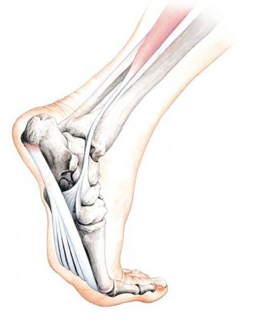 Эндопротезирование на голеностопном суставе