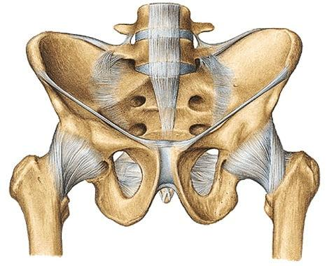 Изображение - Коксартроз тазобедренного сустава операция anatomiya-TBS-1