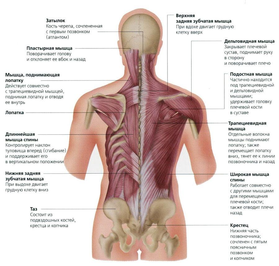 Восстановление после операции по удалению грыжи позвоночника: сколько длится курс реабилитации, процедуры и отзывы