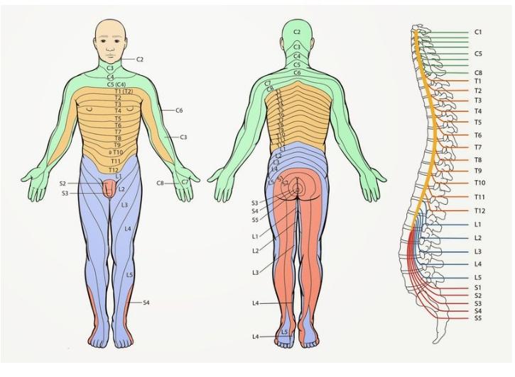 Карта локализации болей